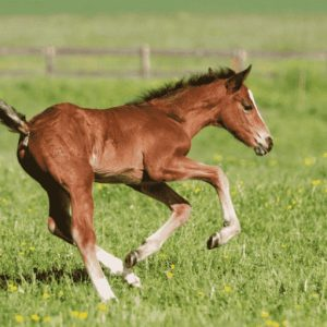 weanling playing